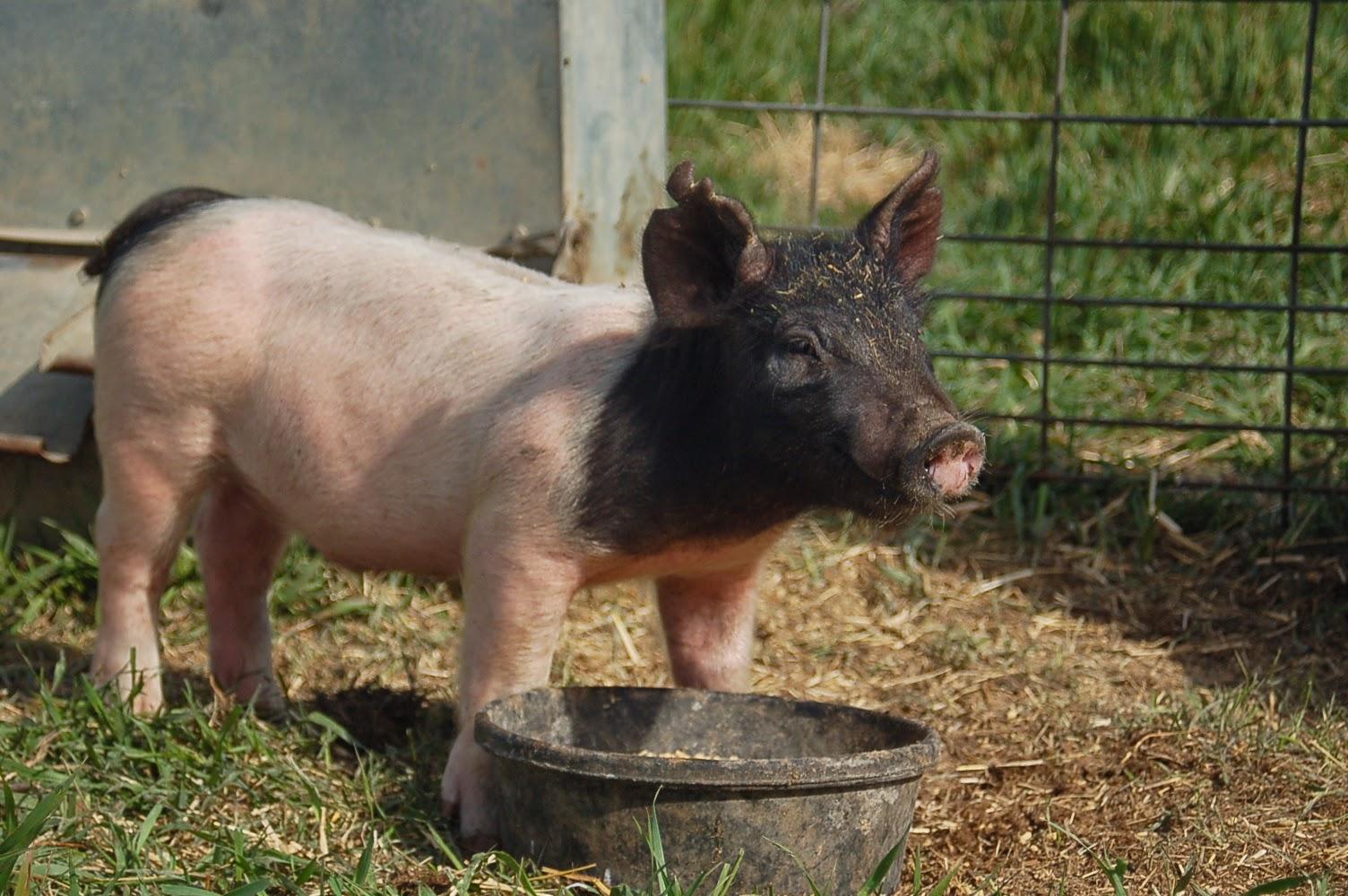 fairview farm life